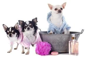 pet-grooming-tips